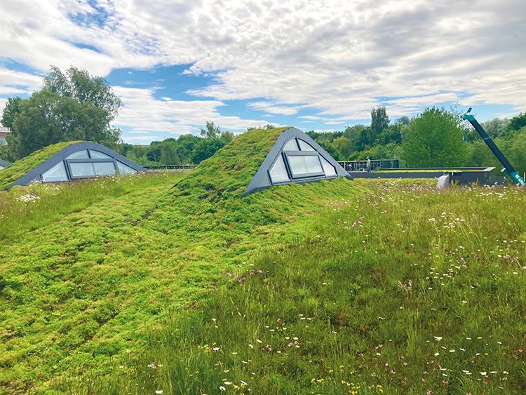 substrat na dachy zielone